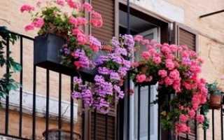 Какие цветы посадить на балконе: солнечная, северная сторона, что лучше выращивать, фото