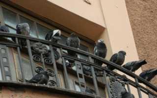 Как избавиться от голубей на балконе и подоконнике: различные способы
