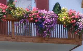 Балконные ящики для цветов — пластиковые, деревянные, руководство по выбору