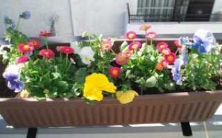 Оформление балкона цветами: как украсить, дизайн, вьющиеся, ампельные, фото