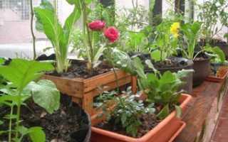 Огород на балконе своими руками: что посадить на подоконнике, окне