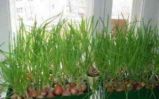 Выращивание зелени на балконе: как вырастить на подоконнике в домашних условиях