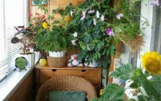 Зимний сад на балконе: устройство своими руками на лоджии, фото