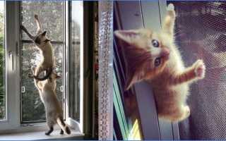Москитная сетка «Антикошка» на окна: виды, особенности, отзывы