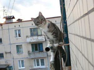 хозяин на балконе