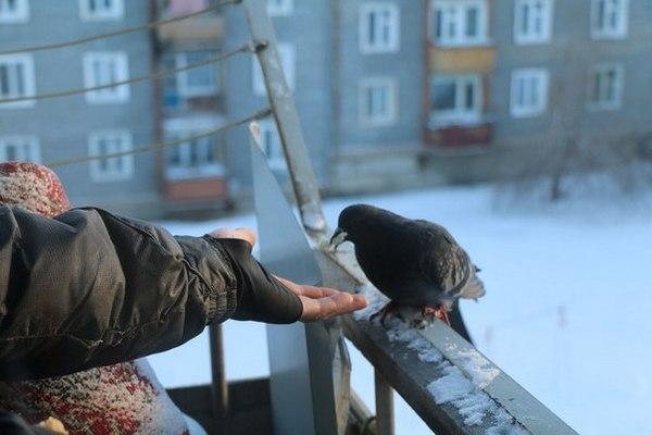 на балконе поселились голуби
