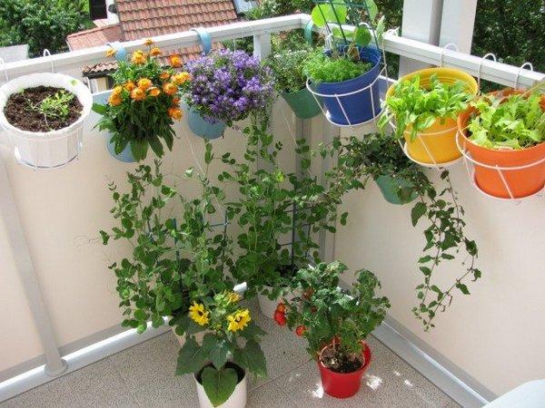 горизонтальное озеленение балкона