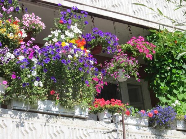 цветы на балконах и лоджиях
