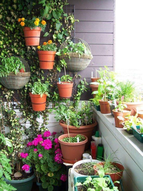 какие цветы сажают на балконе