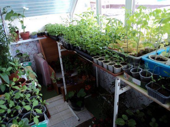 домашний огород на балконе