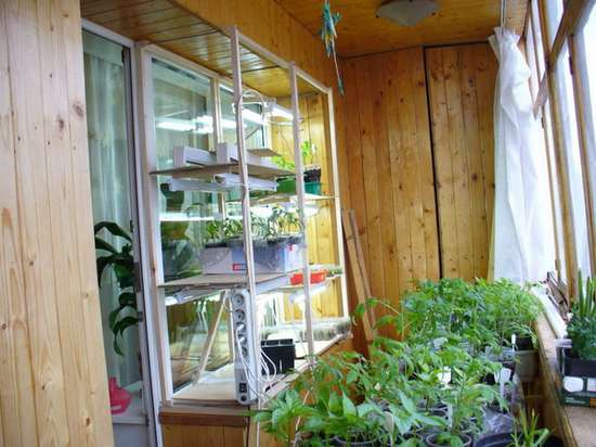 домашний мини огород