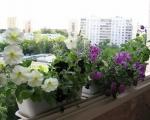 Балконные ящики для цветов-7-2