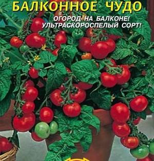 помидоры на балконе сорта