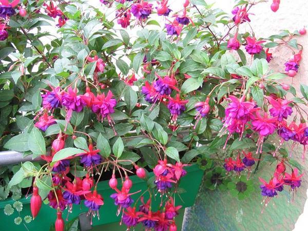 как посадить цветы на балконе