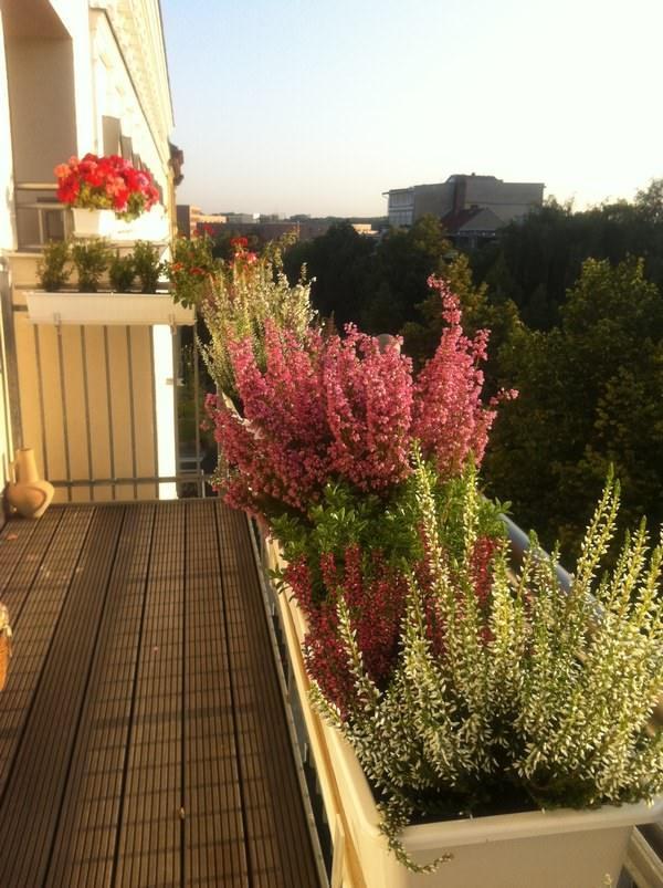 цветущий балкон своими руками
