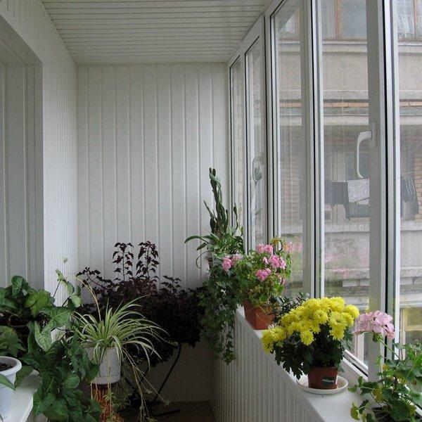 устройство зимнего сада