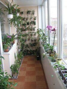 зимний сад балкон